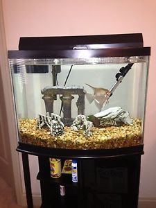 29 Gallon Fish Tank with Stand Filter Heater Complete Turnkey Set Up