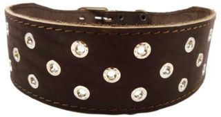 "Studs Brown Leather Dog Collar 3"" Large 19"" 22 5"""