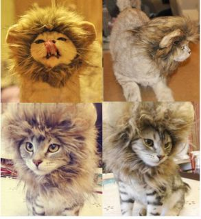 Pet Costume Lion Mane Wig for Dog Cat Halloween Dress Up with Ears WHN04