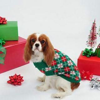 Paw Appeal Christmas Red Green Argyle Knit Small Dog Puppy Pet Teacup Sweater XS