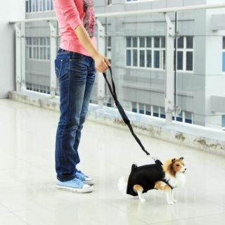 3 in 1 Multi Function Pet Dog Coat Apparel Clothes Leash Harness Carrier Bag M