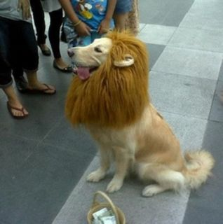 E Costume Lion Mane Wig for Dog Cat Halloween Clothes Festival Fancy Dress Up