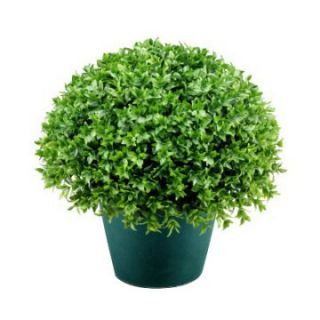 13 in. Globe Japanese Holly with Green Pot   Topiaries